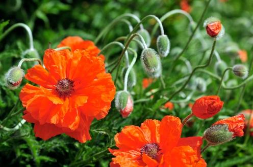 © BERNDT ANDRESEN, Planten un Blomen 2012